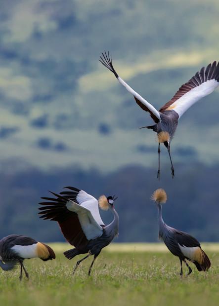 The Course Of Evolution Photography Art | danieldauria