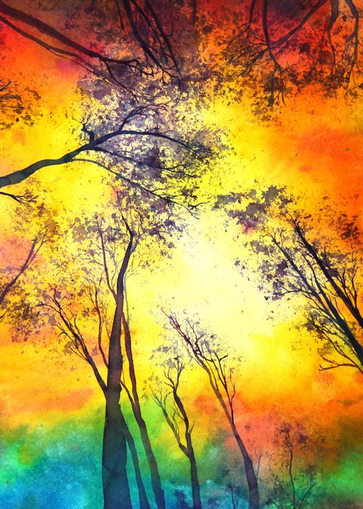 Sun Gazing Through The Trees Art   Mickey La Fave