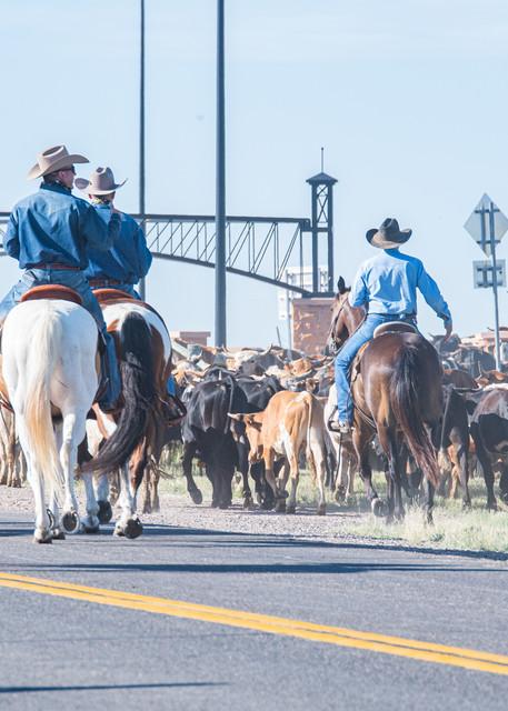 Cattle Jam Art | Artist David Wilson