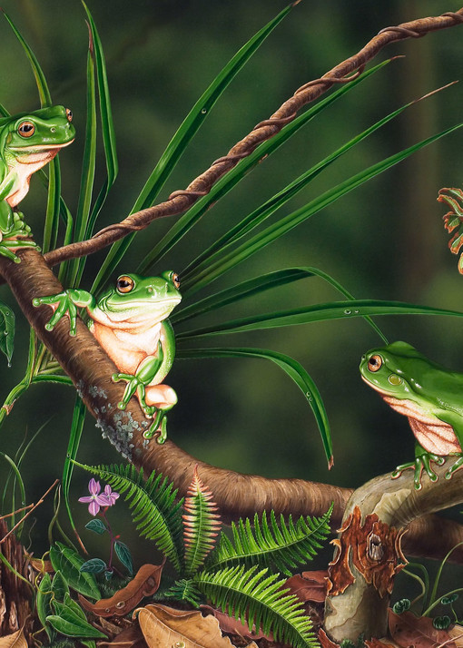 Midnight Chat - Common Green Tree Frogs with Blue Triangle Butterfly Australian Native Wildlife
