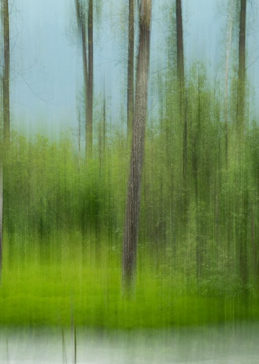 Abstract blur of forest and stream.