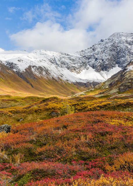 Winter's first snow on the Chugach Mountains contrasts with late autumn colors in Hanging Valley in Chugach State Park in Southcentral Alaska. Afternoon.