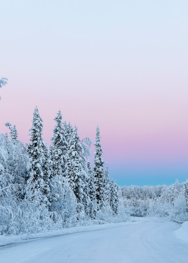 Belt of Venus and hoarfrost at sunrise along a back road in Southcentral Alaska. Winter.