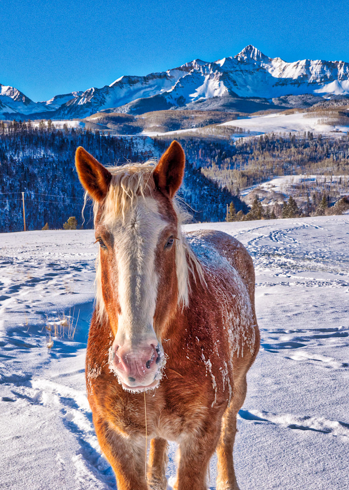 Horse On A Chilly Morning Close Up Photography Art | Peter Batty Photography