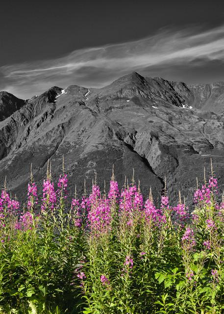 Fireweed   Selective Color Photography Art | Ray Bulson Photography