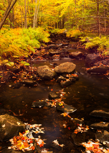 Acadia Stream 2122 Photography Art | Craig Primas Photography