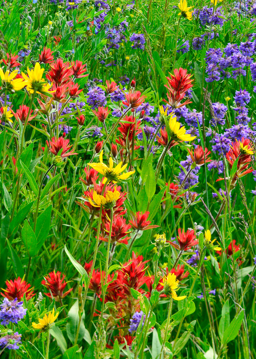 Wildflower Summer Photography Art | Craig Primas Photography