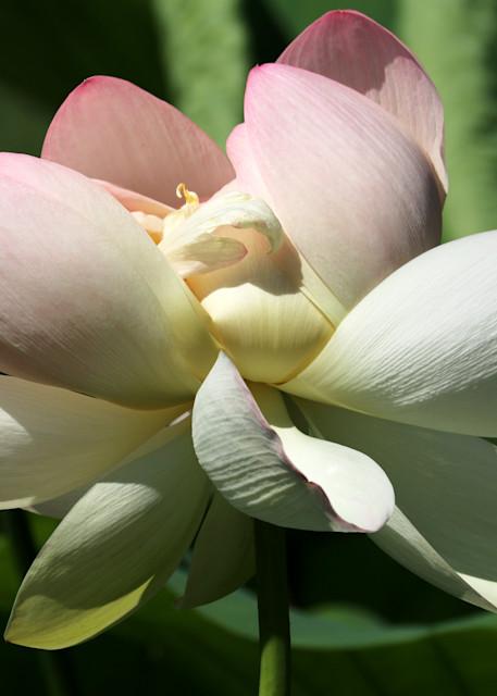 Lotus Blossom Art | Moore Design Group