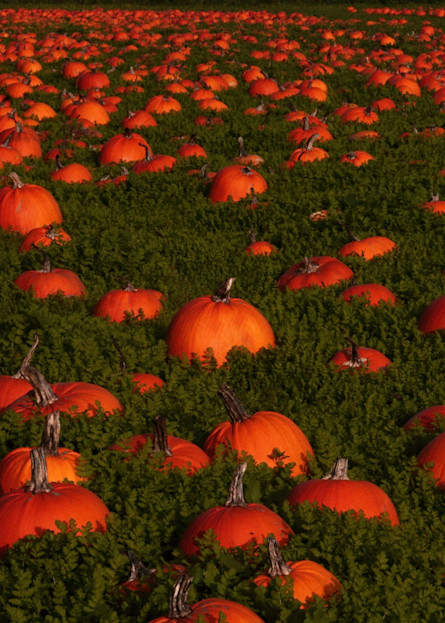Pumpkin Field Art | Drew Campbell Photography