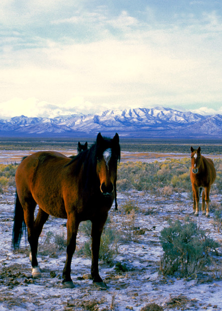 White River Wild Horses Photography Art | Craig Primas Photography