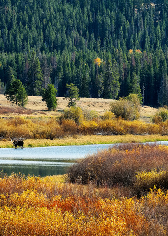 Oxbow Moose And Canoe Photography Art | Craig Primas Photography