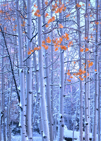 Early Winter Vpan Photography Art | Craig Primas Photography