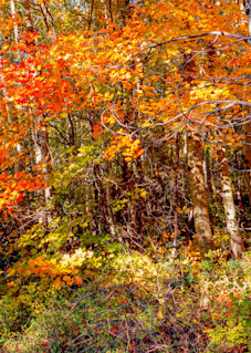 Cedar Highlands Canvas Photography Art | Craig Primas Photography