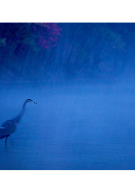 Photo of a heron in Walden Pond at dusk.  Photographic print available for purchase.