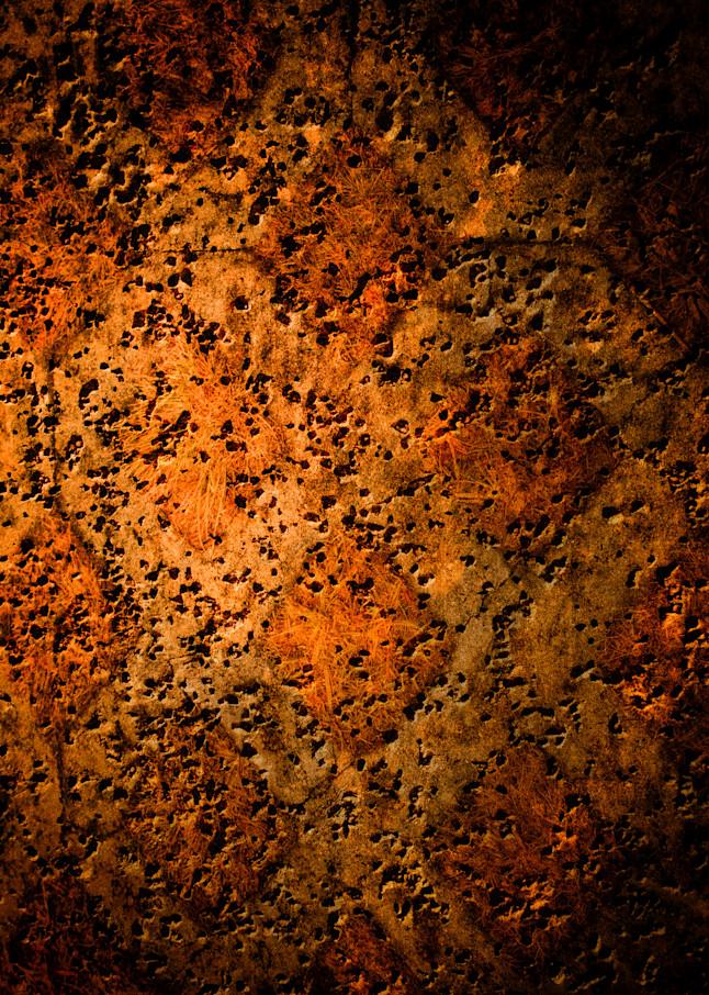 Bristled Photography Art | Caplan Studios Vault, LLC