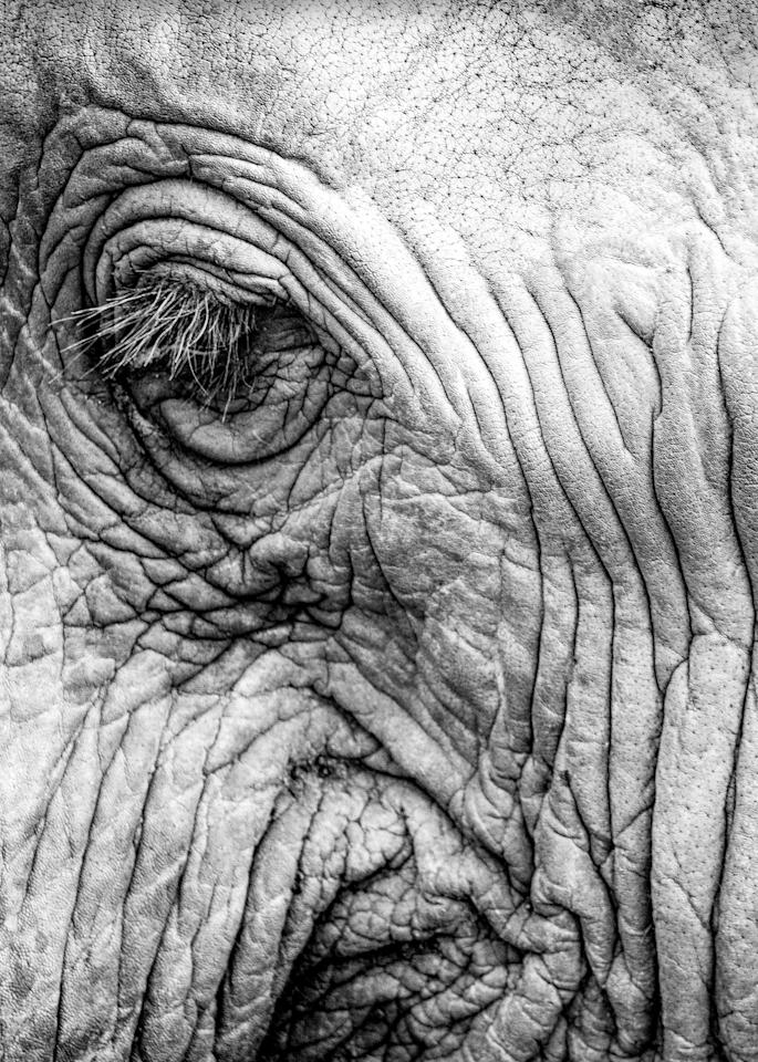 Elephant Eye No. 1, 2017 by artist Carolyn A. Beegan