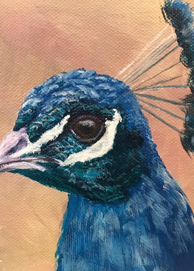 Peacock 3/3 Art | alanajudahart
