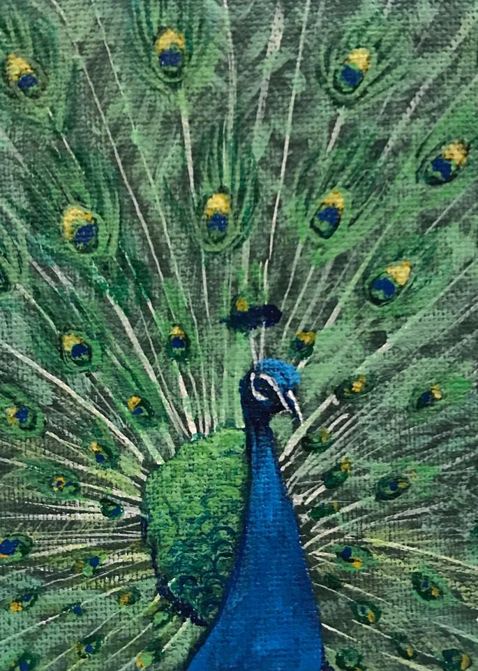 Peacock 2/3 Art | alanajudahart