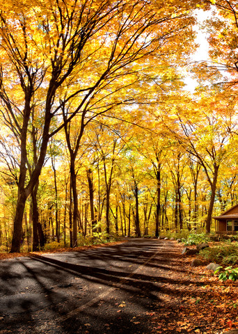 Autumns Fire Photography Art   templeimagery