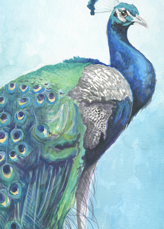 Blue Watercolor Peacock