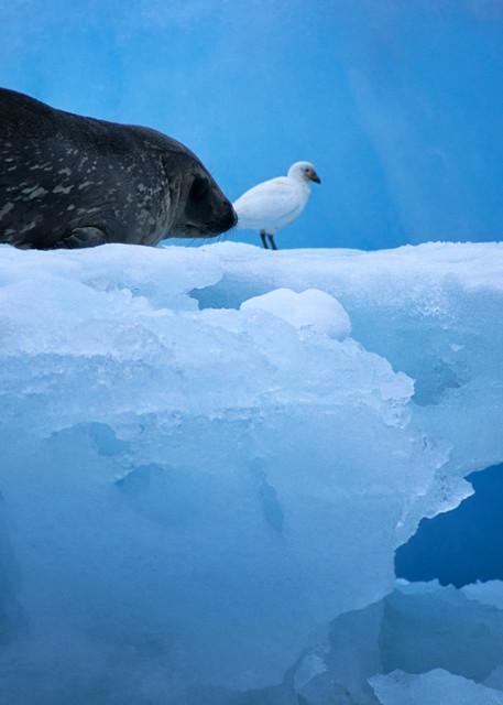 Seal With Bird Photography Art   templeimagery