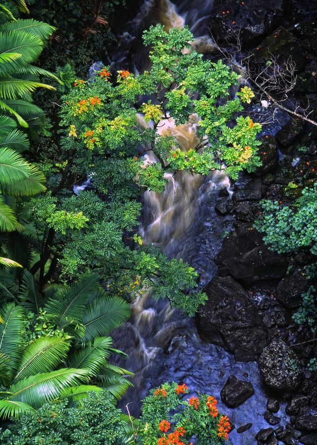 Hawaiian Dream Photography Art   templeimagery
