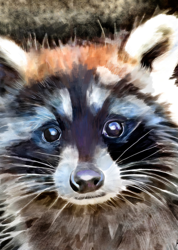 Simon The Raccoon