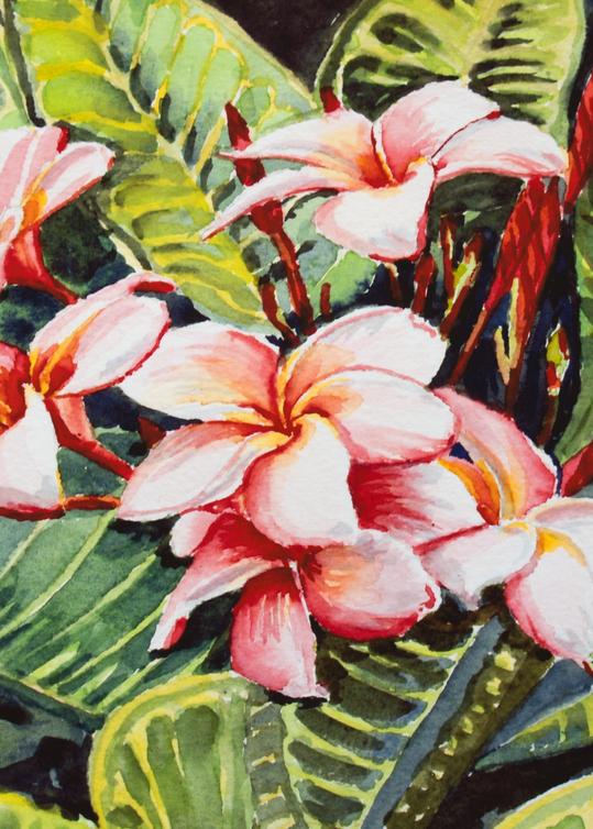 Rainbow Plumeria Art for Sale