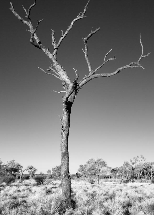 fine art photography australia tree bush