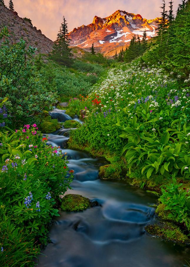 Paradise Park Mt Hood Oregon