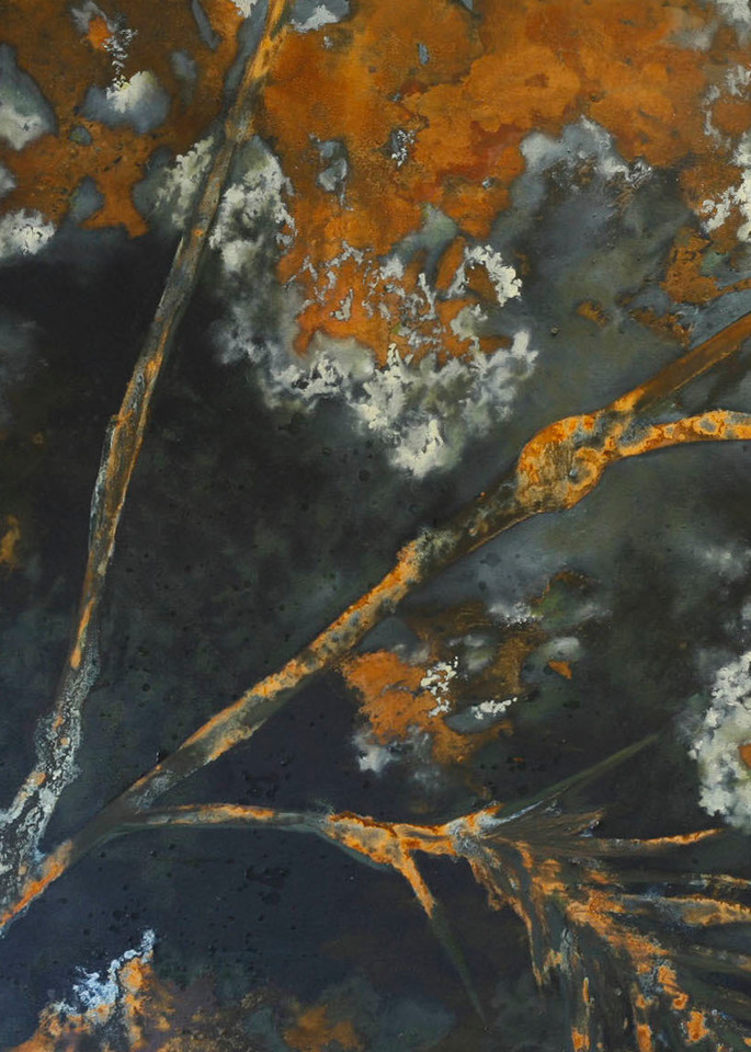 Dusk, black, rust, tree, branch
