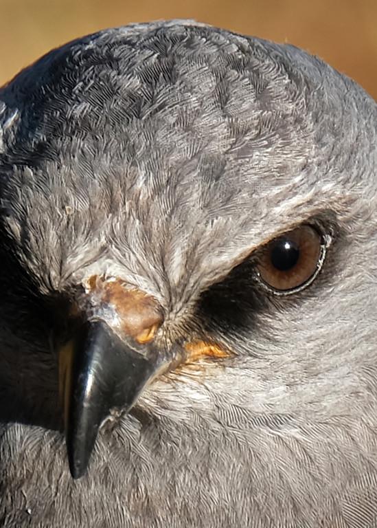 Raptors In October 42 Photography Art | Drone Video TX