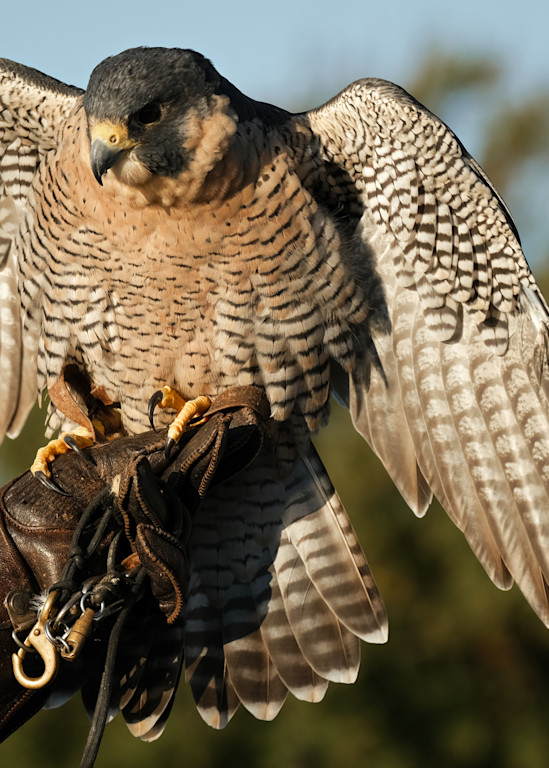 Raptors In October 22 Photography Art | Drone Video TX