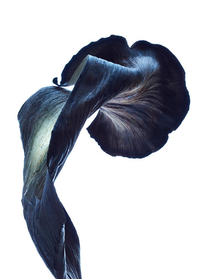 William Couture Nebula 3240 Photography Art | William Couture