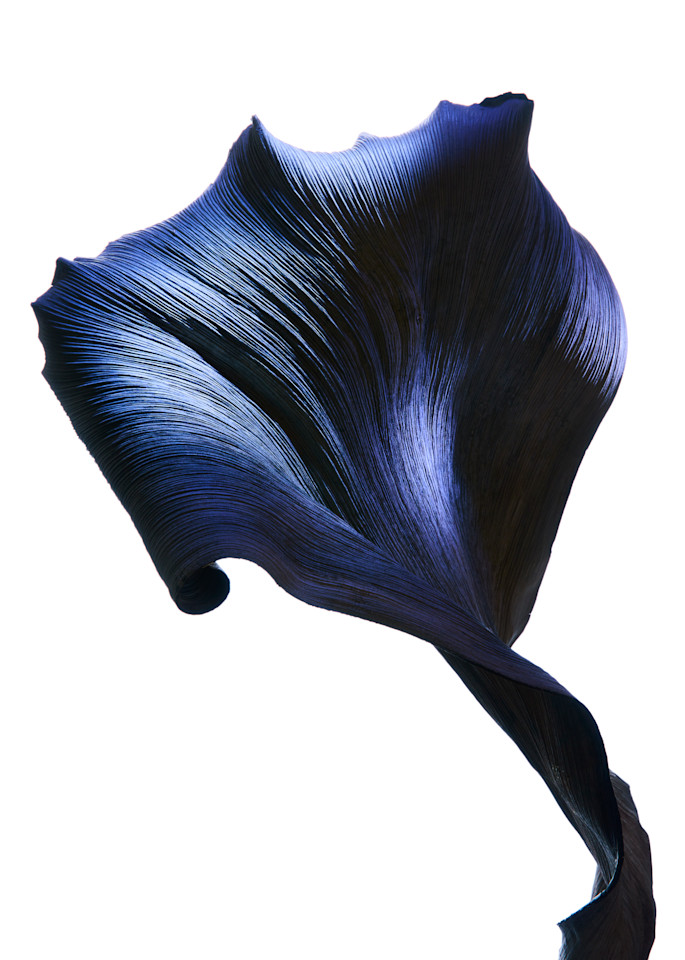 Flower #7 3240 Photography Art | William Couture