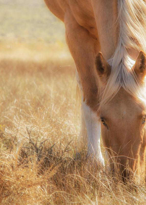Morning Meadow Light Photography Art | JL Grief Fine Art Photography