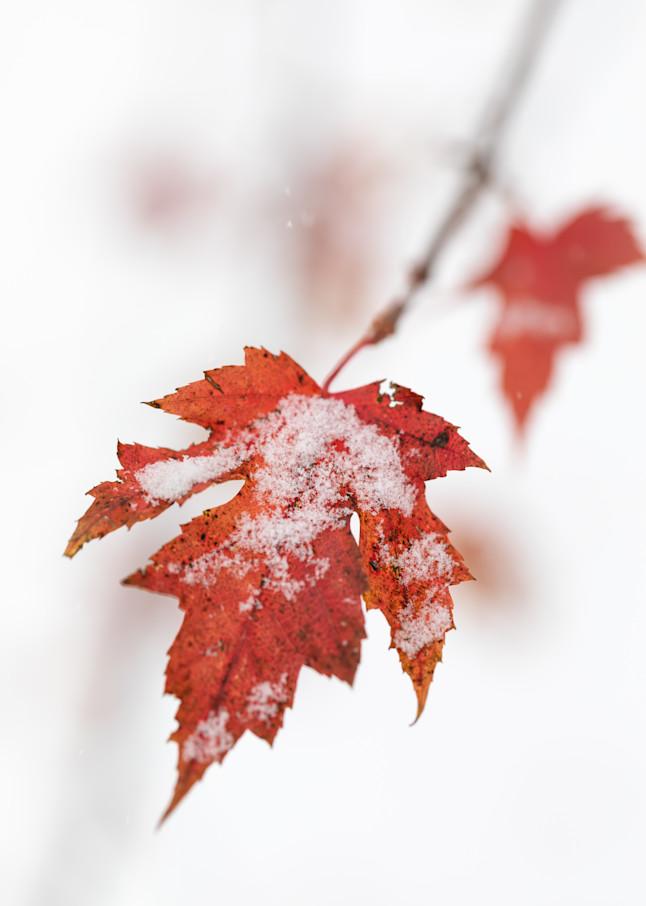 Autumn hanging on to the last - shop fine art prints | Closer Views