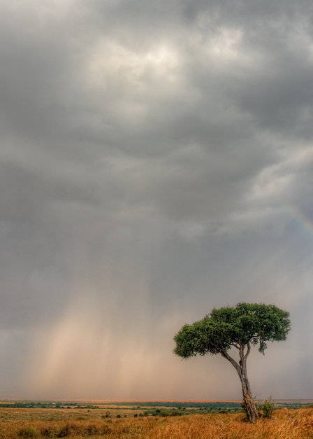 Clearing Storm, Masai Mara, 2016. Photography Art   Tom Stahl Photography