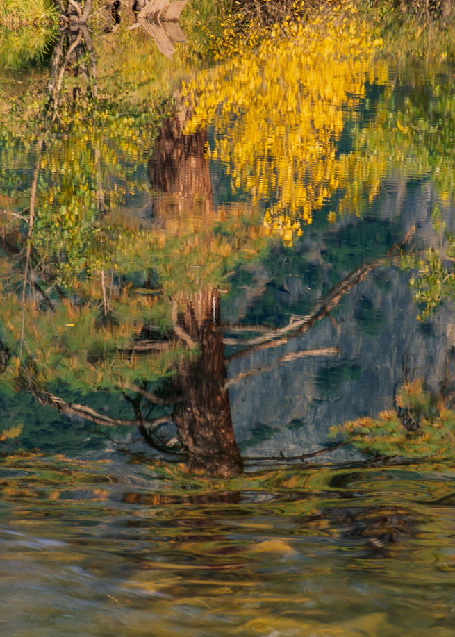 Tree Reflection, Merced River, 1991. Photography Art   Tom Stahl Photography