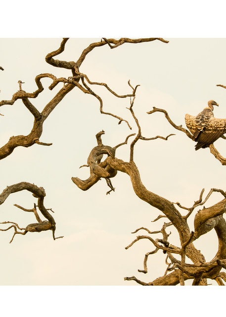 Tree Sculpture With Vulture Photography Art | Tim Laman