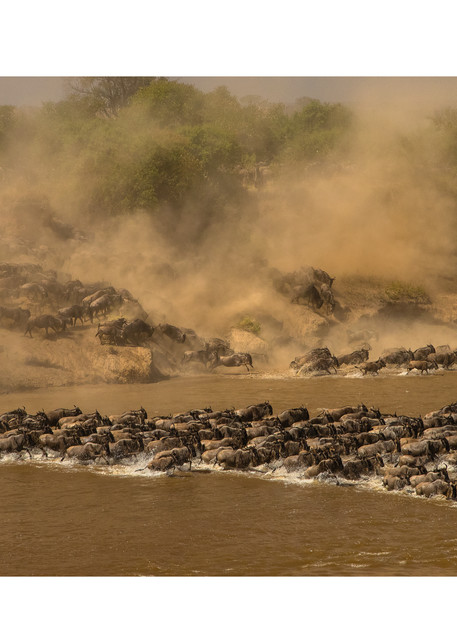 The Mara River Crossing Photography Art | Tim Laman