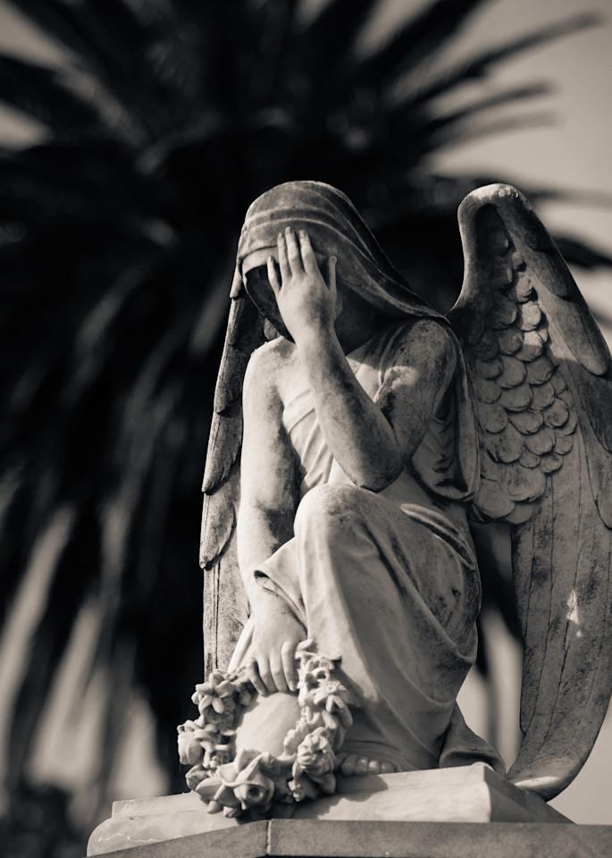 Weeping Angel And Fan Palm Ipc Photography Art | Dan Katz, Inc.
