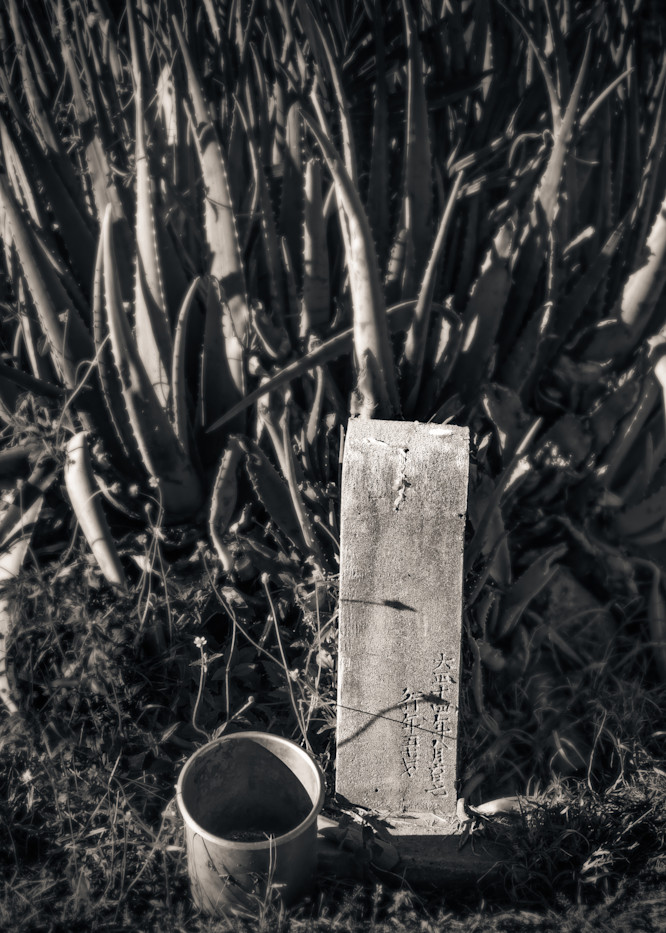 Grave Marker And Cactus Maui 2018 Photography Art | Dan Katz, Inc.