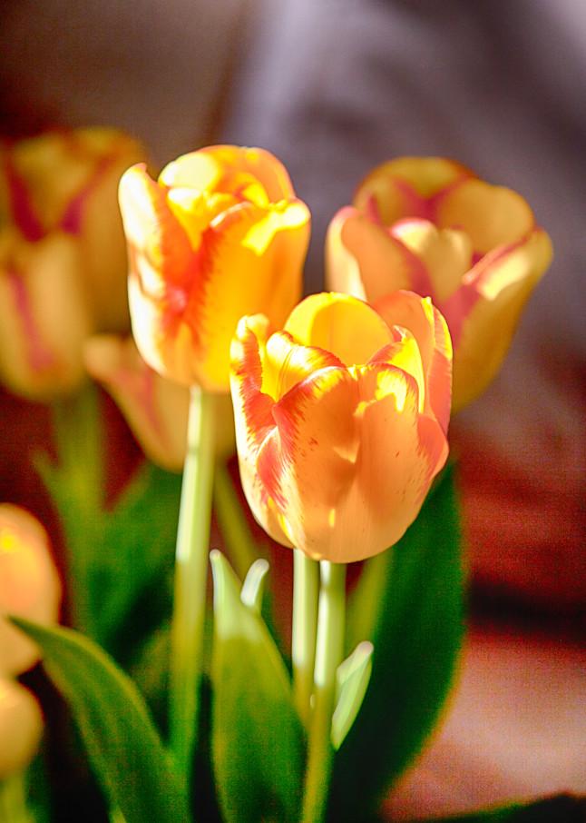 Tulips Photography Art   Rosanne Nitti Fine Arts
