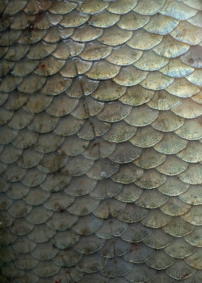 Fish Scales Art   Wet Paint NYC