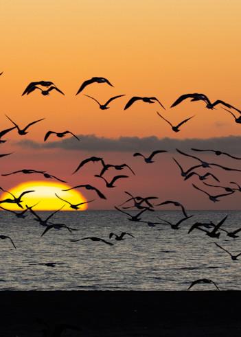 Sunset And Gulls Oxnard Photography Art | Dan Katz, Inc.