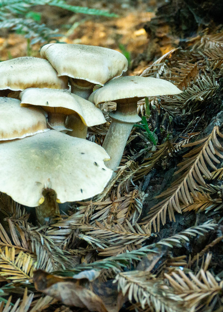 Mushroom City, AIDS Memorial Grove, Golden Gate Park, San Francisco, CA