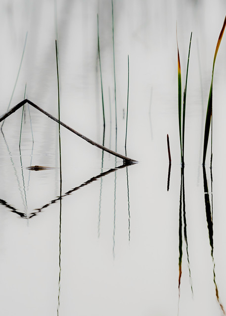 Constance Mier fine art photography - beautifully captured patterns and designs from Florida's Everglades