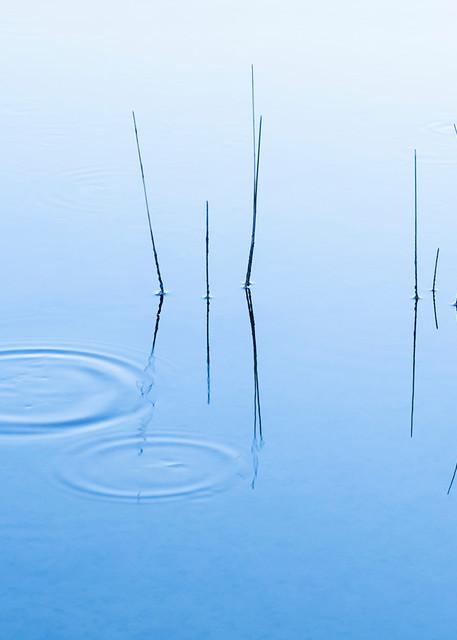 Constance mier fine art nature photography - simplistic nature scenes taken in Florida's Everglades