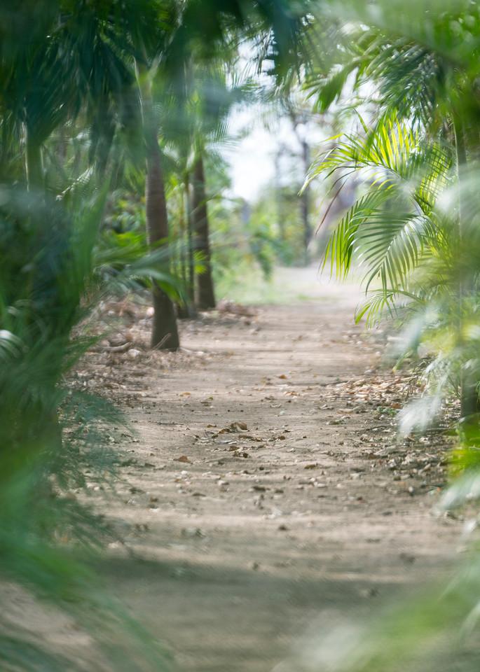 Paradise Path Photography Art | Kit Noble Photography